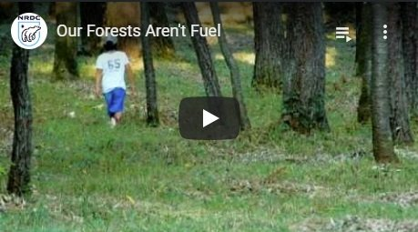 2011-03-15-biomassmurder-org-our-forests-aren-t-fuel-nrdc-english