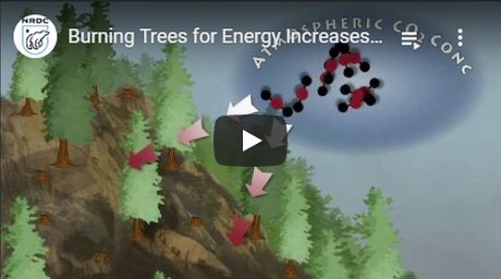 2011-09-06-biomassmurder-org-burning-trees-for-energy-increases-carbon-pollution-and-threatends-our-forests-nrdc-english