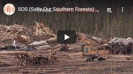 2015-10-26-biomassmurder-org-sos-save-our-southern-forests-call-to-action-dogwood-alliance-english