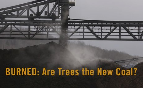 2019-11-22-edsp-eco-pro-biomass-lobbyfacts-research-part-3-scientists-burned-documentary-are-trees-the-new-coal